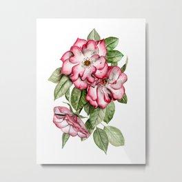 Blooming Pink Garden Roses Metal Print