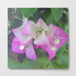 Soft Purples Metal Print