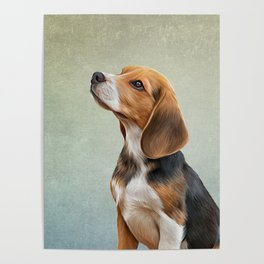Drawing puppy Beagle Poster