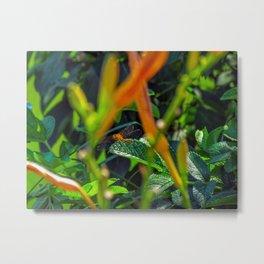 Maine Dragonfly (2) Metal Print