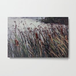 Cattails and pond photograph, Alaska Metal Print