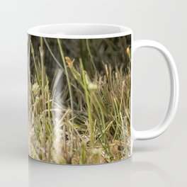 Release of a Young Skunk Coffee Mug