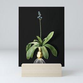 Vintage Scilla Lilio Hyacinthus Botanical Illustration on Black (Portrait) Mini Art Print