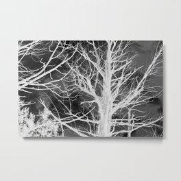 juniper shadows Metal Print