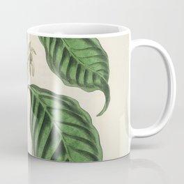 Coffea arabica  from Medical Botany (1836) by John Stephenson and James Morss Churchill Coffee Mug