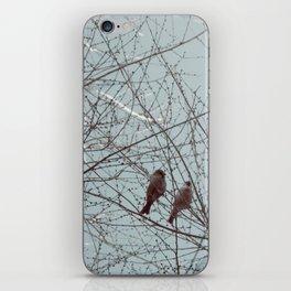 city bird iPhone Skin