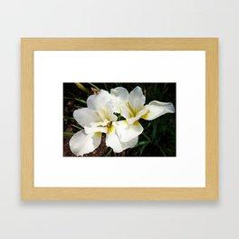 White Iris I Framed Art Print