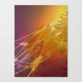 Sun Kissed Dahlia Canvas Print