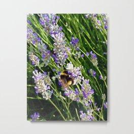 Lavender Bumble Bee in Turkey Metal Print