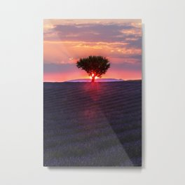 Lavender sunset in Valensole Metal Print