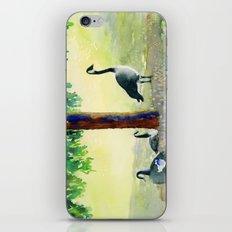 Canadian Geese iPhone & iPod Skin