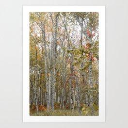 Acadia Woods Art Print