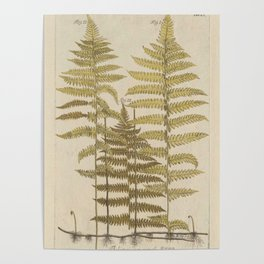 Vintage Fern Botanical Poster