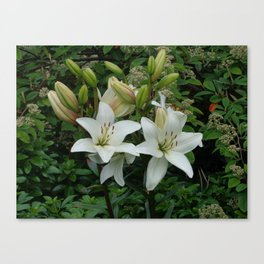Blooming Lilies Canvas Print