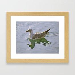 Seagulls Swim Framed Art Print