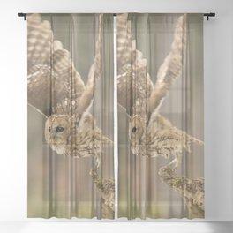 Tawny Takeoff Sheer Curtain