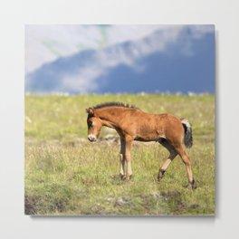 Watercolor Horse 30, Icelandic Pony, Höfn, Iceland, Stretch! Metal Print