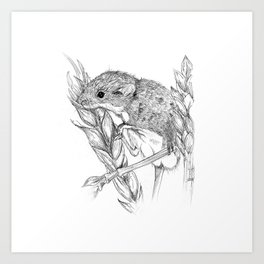 Harvest mouse Art Print
