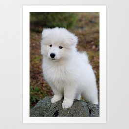 Cute samoyed dog puppy in the forest Art Print