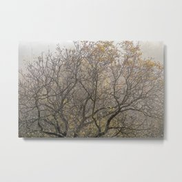 Autumnal tree branches Metal Print