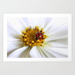 Lady Bug and her Cosmo Art Print