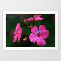 Lovely pink Art Print