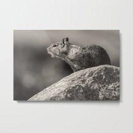 Ground Squirrel BW Metal Print