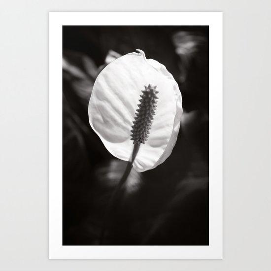 Secret Garden ~ No.2 Art Print