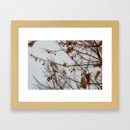 2017-11-22 Framed Art Print