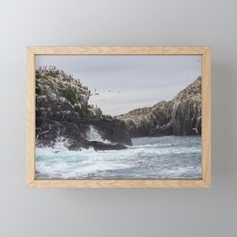 The Farne Islands Cliffs Framed Mini Art Print