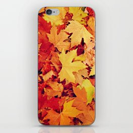 Indian Summer 6 iPhone Skin