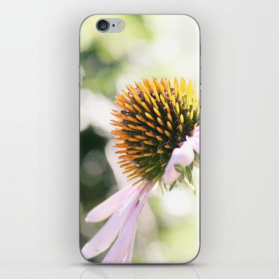 Elegance in Autumn iPhone & iPod Skin