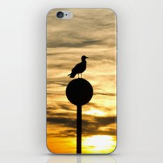 Birds in the sunset iPhone & iPod Skin