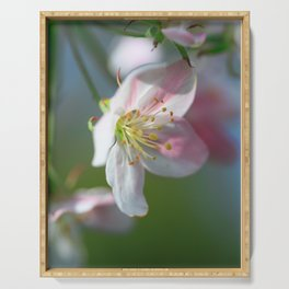 Apple Tree Blossoms In Spring Serving Tray