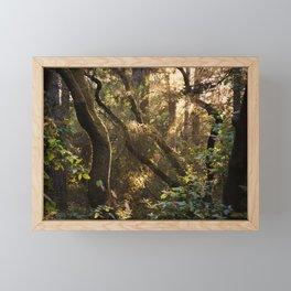 Sunset in the Forest Framed Mini Art Print
