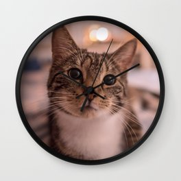 A relaxing kitty / kitten Wall Clock