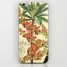 Botanical Illustration No.4922 iPhone & iPod Skin