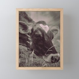 Dairy Cow Eating Grass bw Framed Mini Art Print