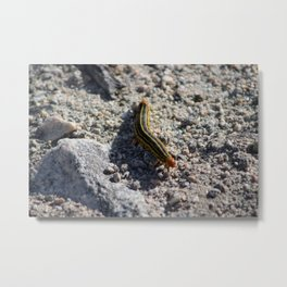 Caterpillar in Coachella Wildlife Preserve Metal Print