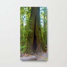 Cathedral Grove on Vancouver Island, BC Metal Print