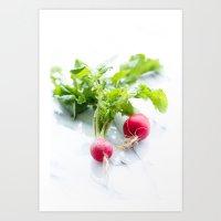 Spring Radishes Art Print