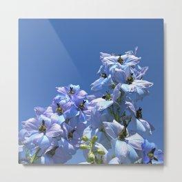 delphinium bloom II Metal Print