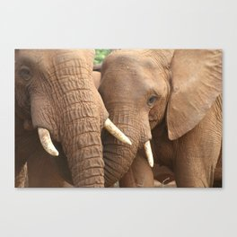 SanWild Elephants Canvas Print