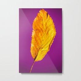 Purple in Autumn Leaf Metal Print