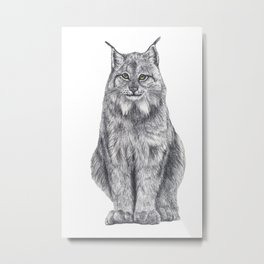 Bobcat from my area Metal Print