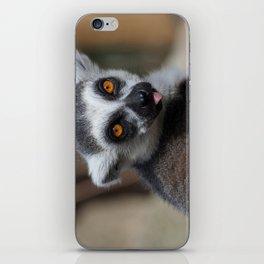 Ring Tailed Lemur iPhone Skin