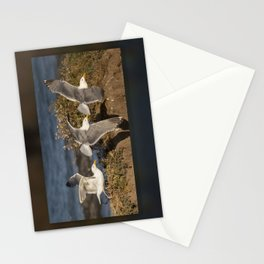 California Seagull (Larus californicus) taking off from a bluff in Mendocino, California. Stationery Cards