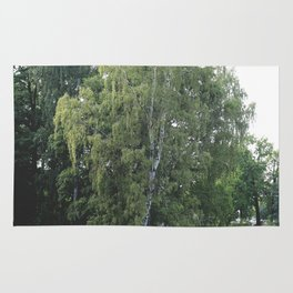 Large white birch on the shore of a reservoir with a dangling leaf crone Rug