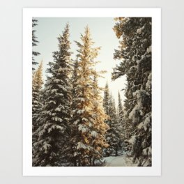 Snowy Pine Trees Glowing in Sunlight Art Print