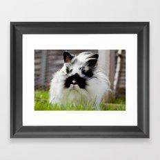 Sooty Bunny. Framed Art Print